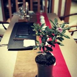花莲里工作环境